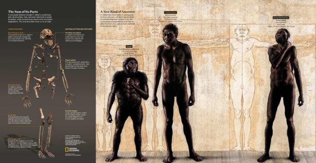 Учёные обнаружили в Африке ранее неизвестного предка человека