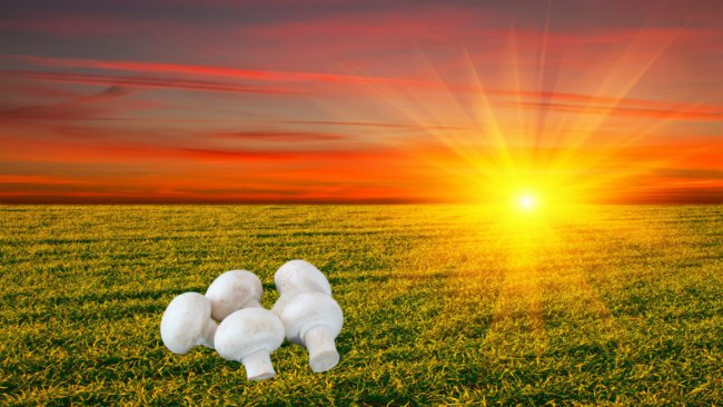 Солнце и шампиньоны