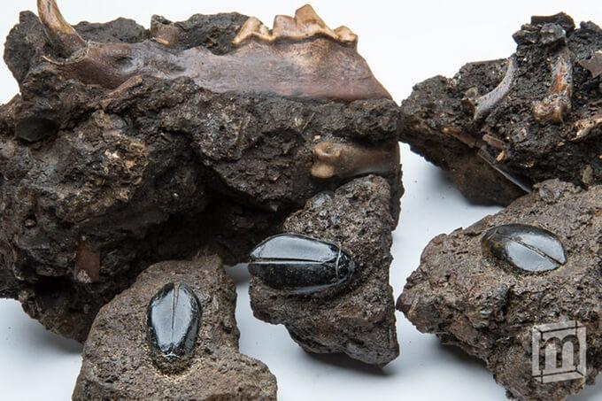 На Kickstarter собрали деньги на «мини-музей» с памятными образцами Земли