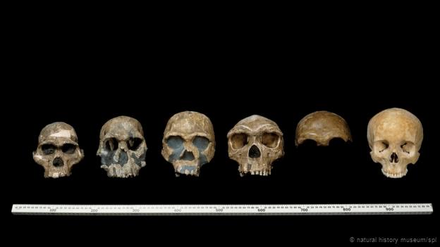 homini