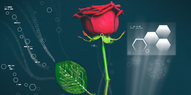 landscape-1448044803-electric-rose