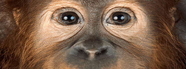 monkey-eyes-fb-cover