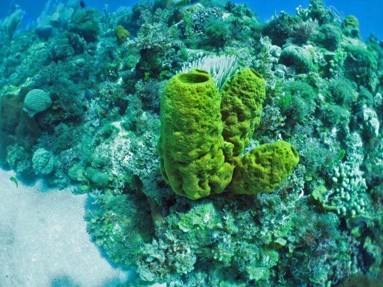 морская губка