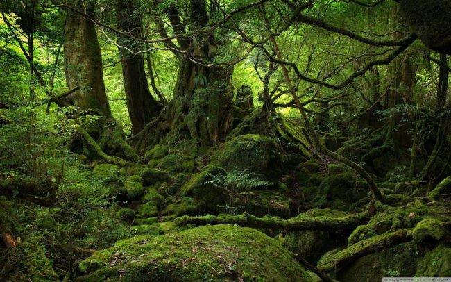 amazon-rainforest4