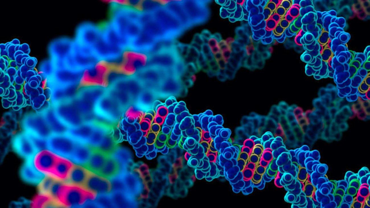 волосы гены