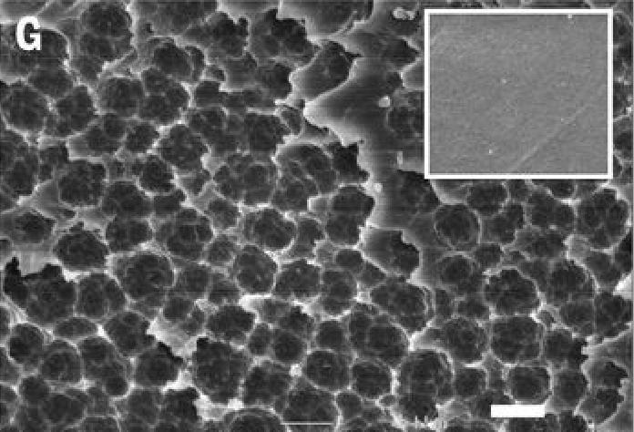Пленка ПЭТ, разрушенная бактериями