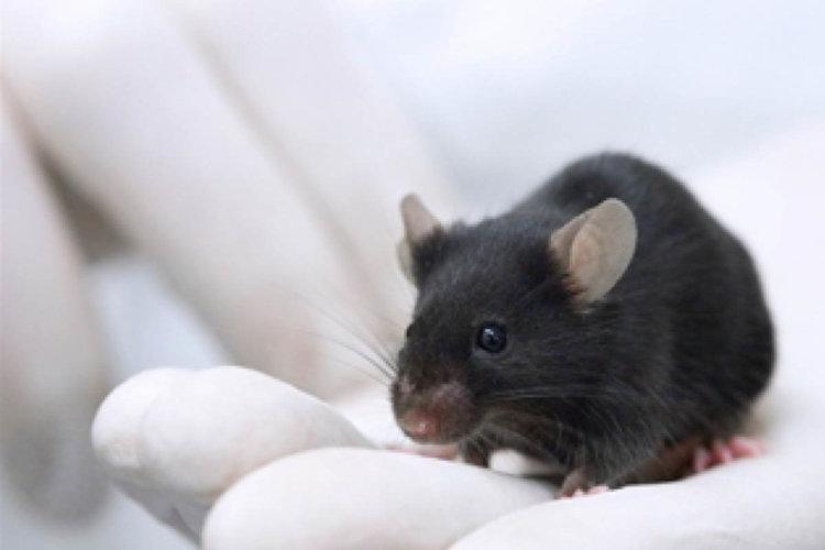 Кишечные бактерии могут вызывать рассеянный склероз