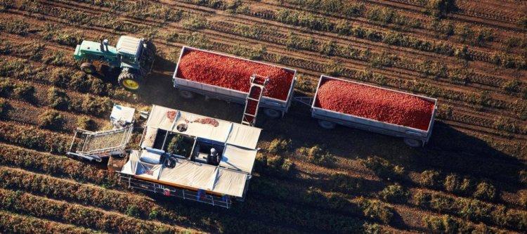 Генная инженерия против продовольственного кризиса