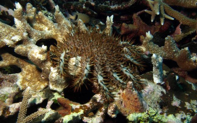 Кораллы стремительно вымирают