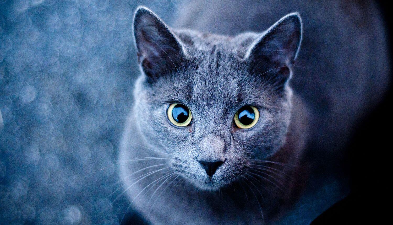 Представлен переводчик с кошачьего языка