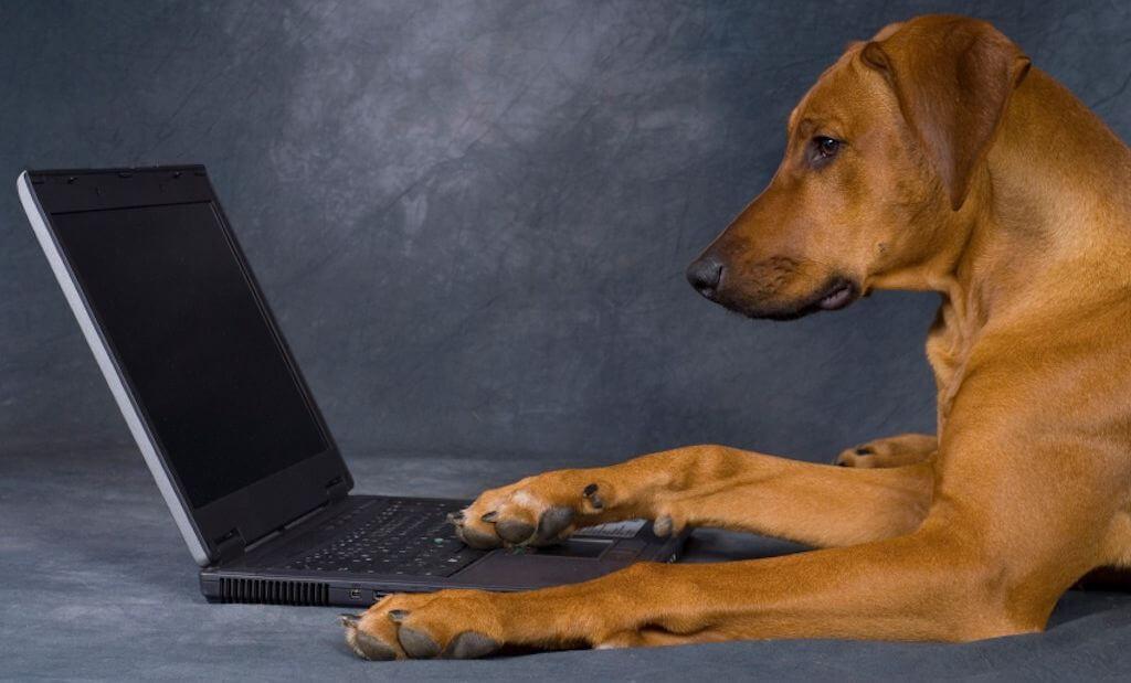Собаки смогут самостоятельно публиковать фотографии в социальных сетях