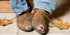 Бедность делает человека глупее