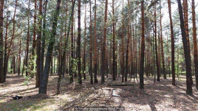 Лес Чернобыль