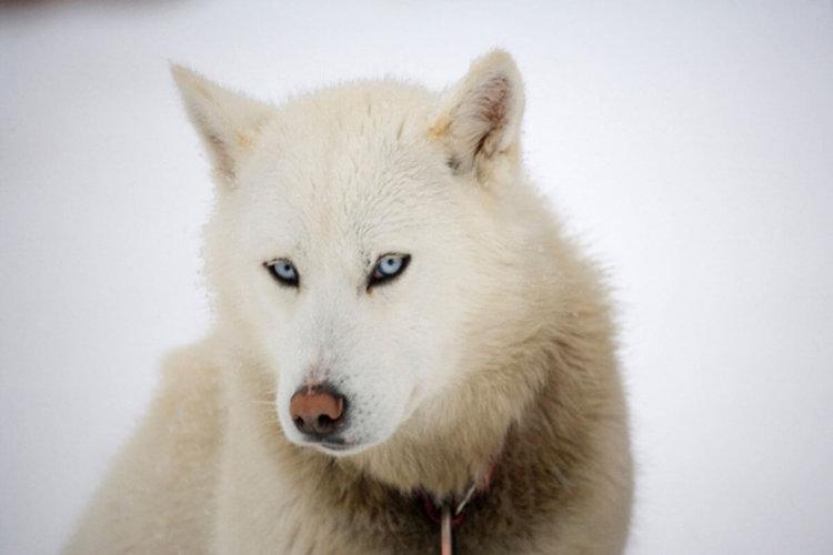 Собаки произошли от волков дважды