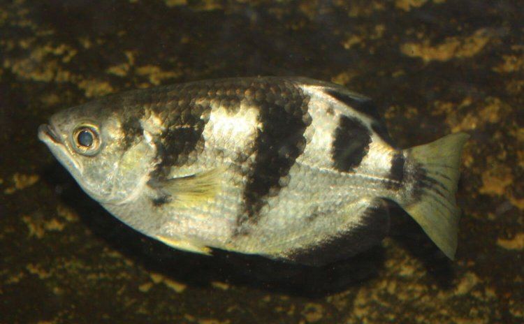 Учёные научили рыбу запоминать человеческие лица и плевать в них