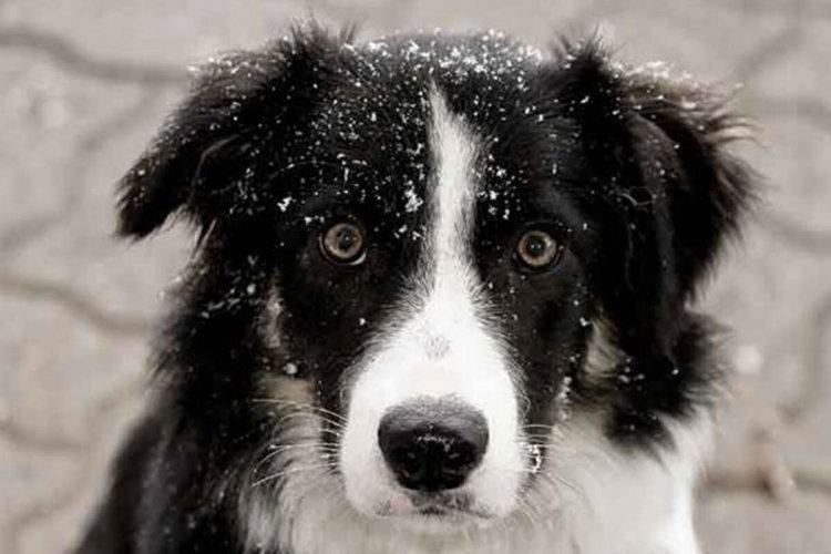Исследование интеллекта собак дало любопытные результаты