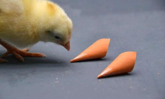 Цветное зрение помогает птицам находить лучшую пищу