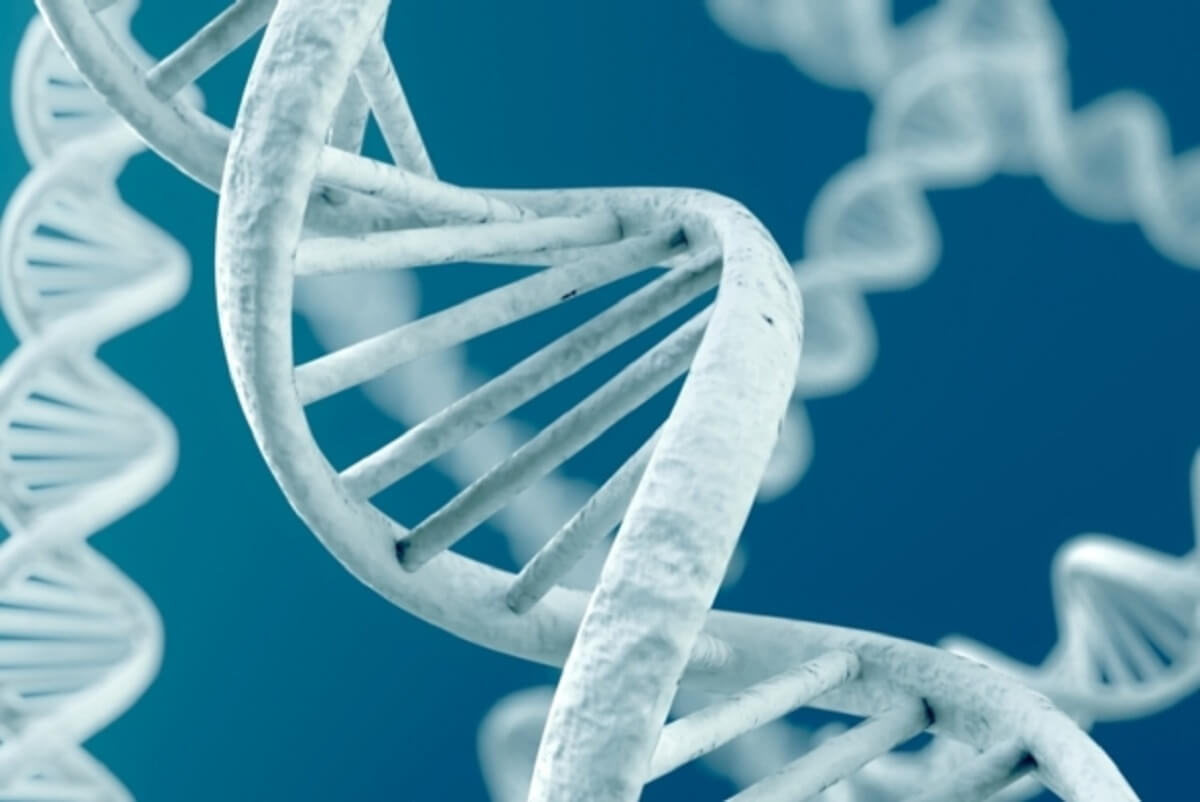 Интеллект зависит от генов