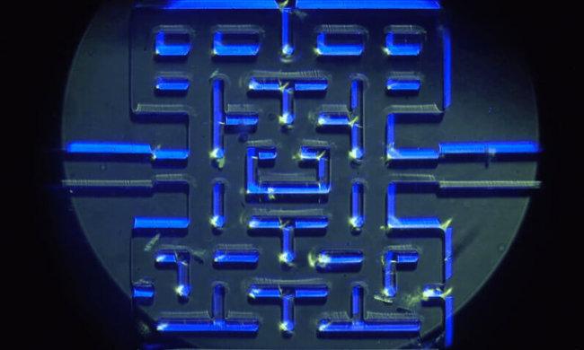 Игра Pac-Man с простейшими организмами в качестве персонажей