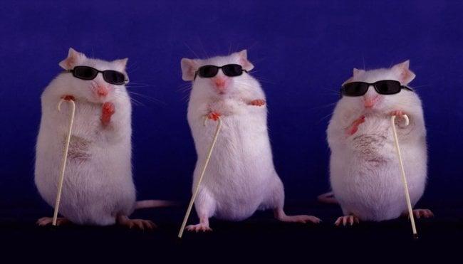 Учёным удалось частично вернуть зрение слепым мышам