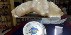 Рыбак на протяжении 10 лет хранил под кроватью 34-килограммовую жемчужину