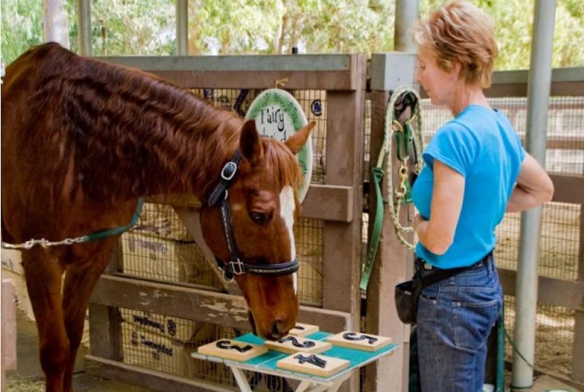 Норвежские ученые научили лошадей общаться с людьми