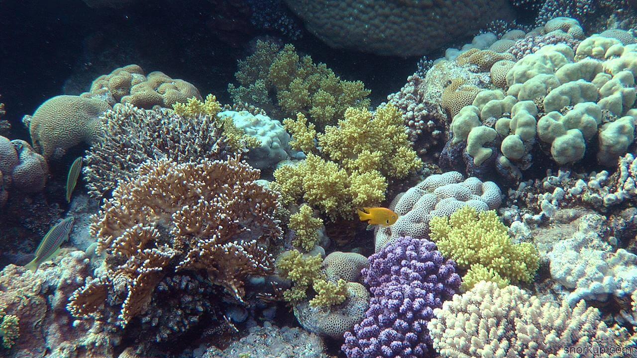 3Д печать восстановит рифы