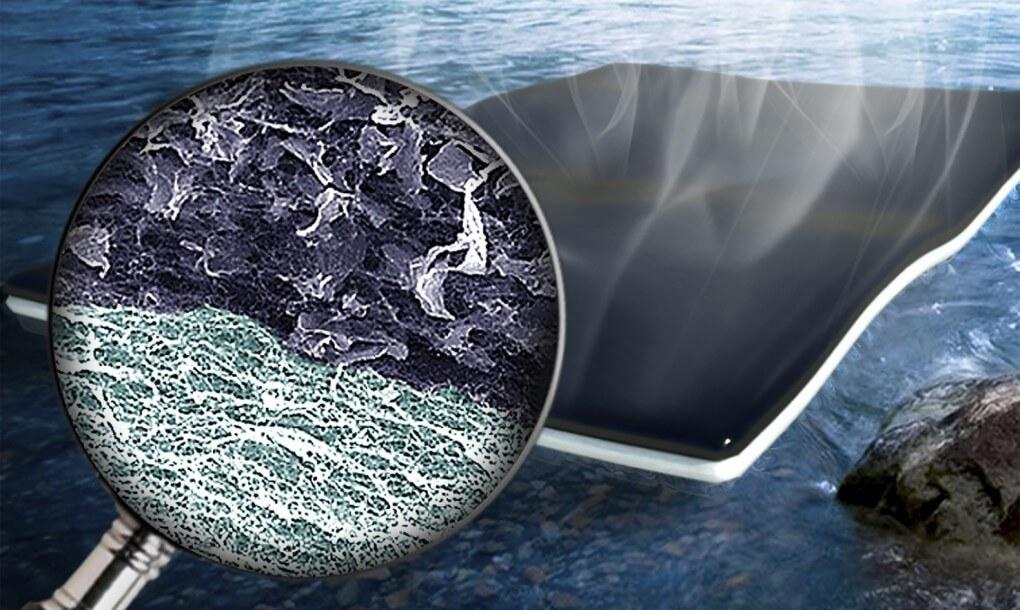 Биогубка поможет очистить воду