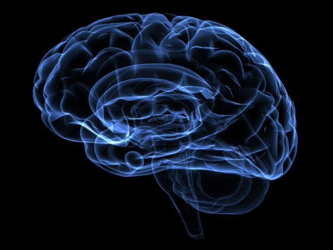 blue_brain-650x488.jpg