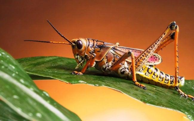 Почему насекомых больше, чем людей?