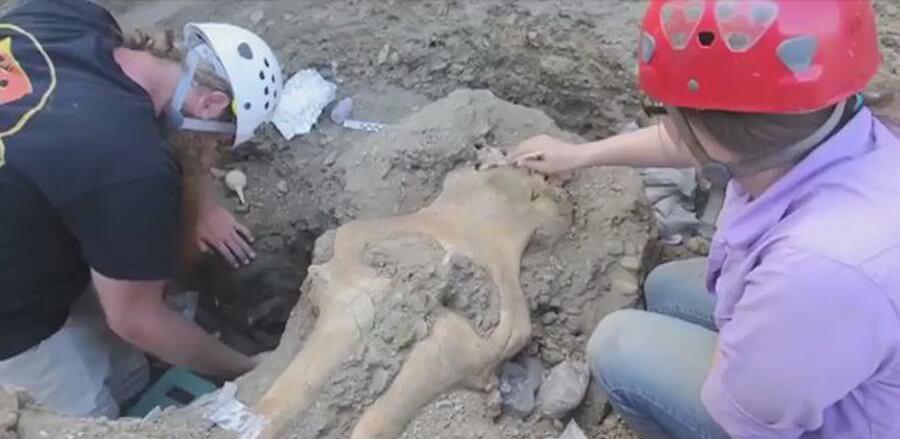В Калифорнии найден череп странного существа