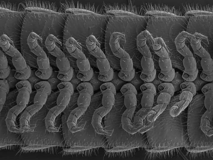 Учёные открыли новый редкий вид многоножки, у которой 414 пар ног