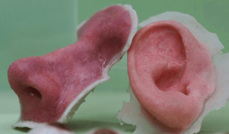 В Австралии откроют центр по производству искусственных органов и тканей
