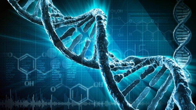 Разработаны днк-нанопроводники, которые могут быть использованы в создании генетических компьютеров