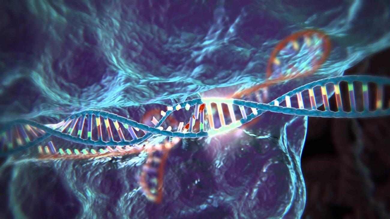 Модифицированные клетки введены в организм человека