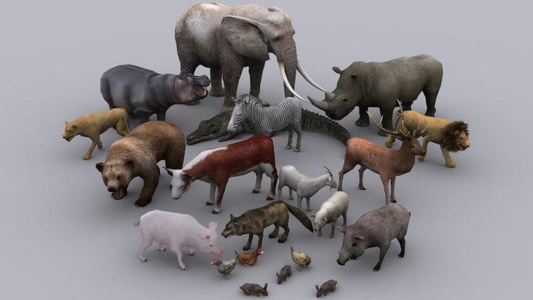 Запущен проект Digital Life, цель которого создать 3D модели всех существующих животных