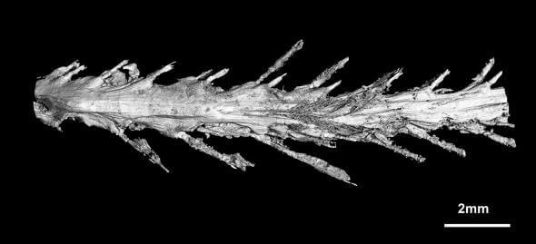 В янтаре впервые нашли сохранившийся хвост динозавра
