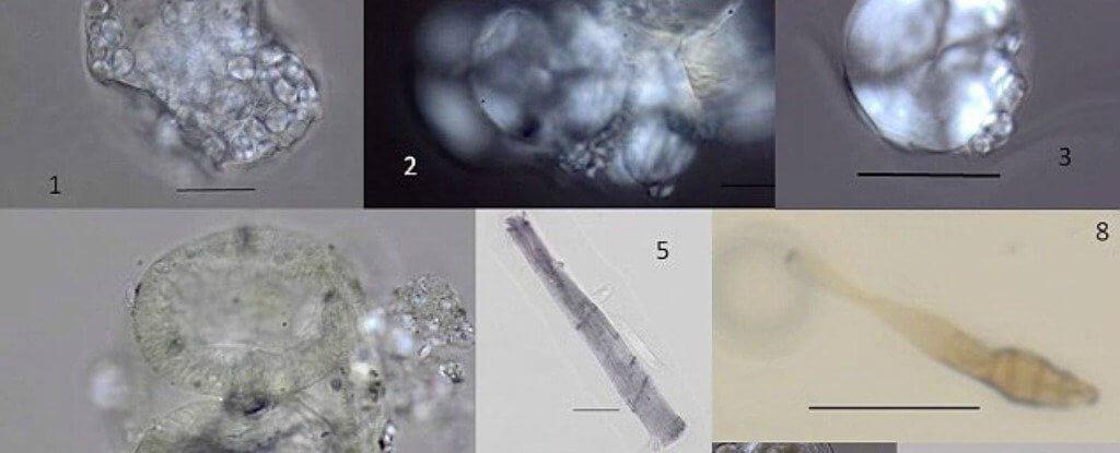 Археологи узнали, чем питались древние предки человека 1,2 миллиона лет назад (12 фото)