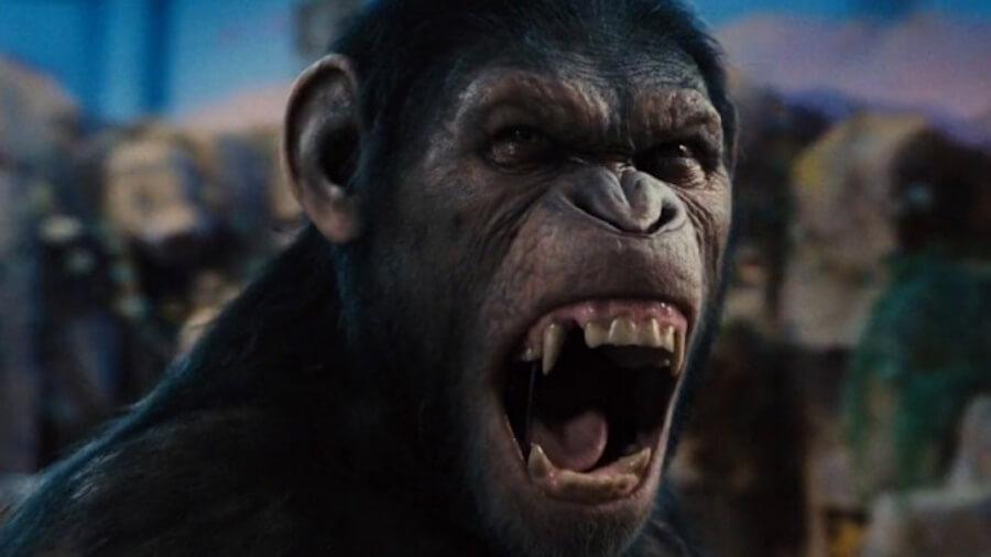 Как звучала бы речь обезьян, если бы они могли говорить