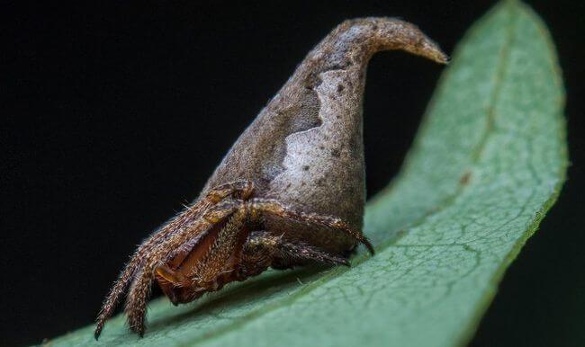 Новый вид паука назван в честь персонажа из Гарри Поттера