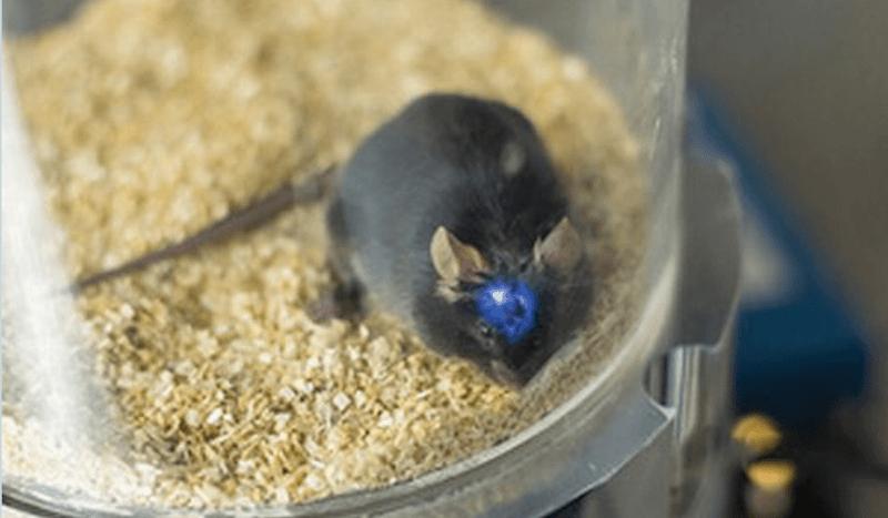 Разработан способ управлять поведением животных с помощью света (2 фото + видео)