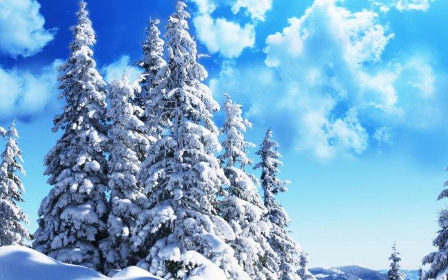 Финны разработали лазерный сканер деревьев