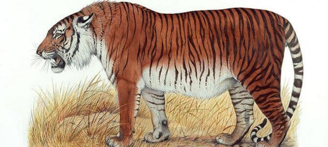 В Средней Азии хотят «воскресить» каспийских тигров