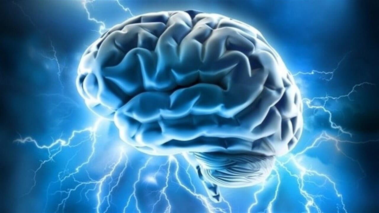 Ученые вырастили искусственный мозг, состоящий изтрех областей