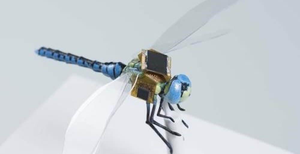 специалисты из Массачусетса создали киберстрекозу (2 фото)