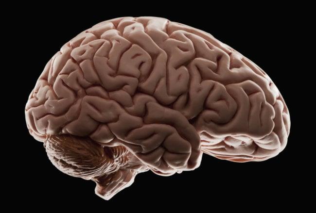 мозг, интересные факты