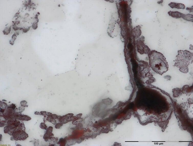 Как были обнаружены самые древние окаменелости в мире (3 фото)