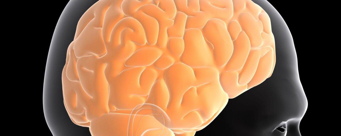 Смена рациона питания могла сделать мозг большим