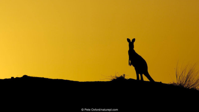 Секреты, которые позволяют животным жить столетиями (4 фото)