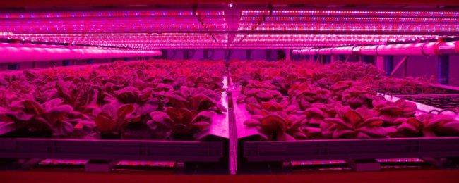 Вертикальные фермы: в будущем каждый сможет выращивать пищу дома (5 фото)